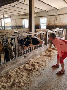 even praten met een koe bij De Kluis